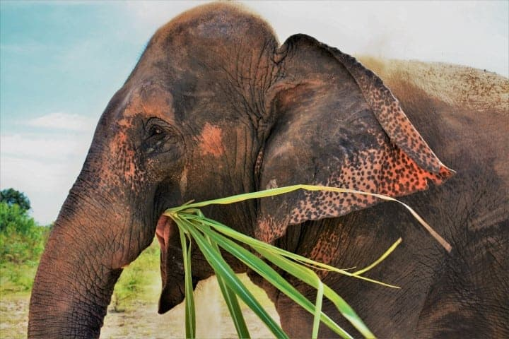 A Week At An Elephant Volunteer Project