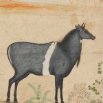 A nilgai in a landscape, Mughal, Northern India, circa 1630-1640 © The Fitzwilliam Museum, University of Cambridge
