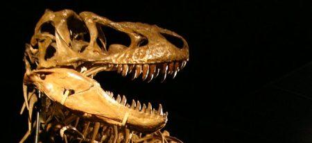 tarbosaurus_mount1