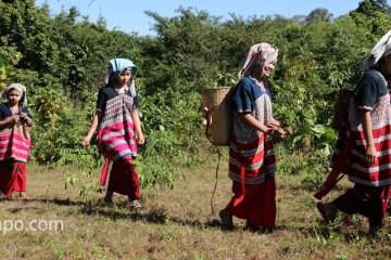 ミャンマー カレン村