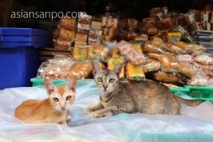 ミャンマー コータウン 猫