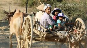 ミャンマー マンダレーーマグェ 牛車