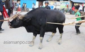 ミャンマー ラヘー ナガ族 マイタン