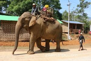 ミャンマー ミッチーナ-ミッソン 象