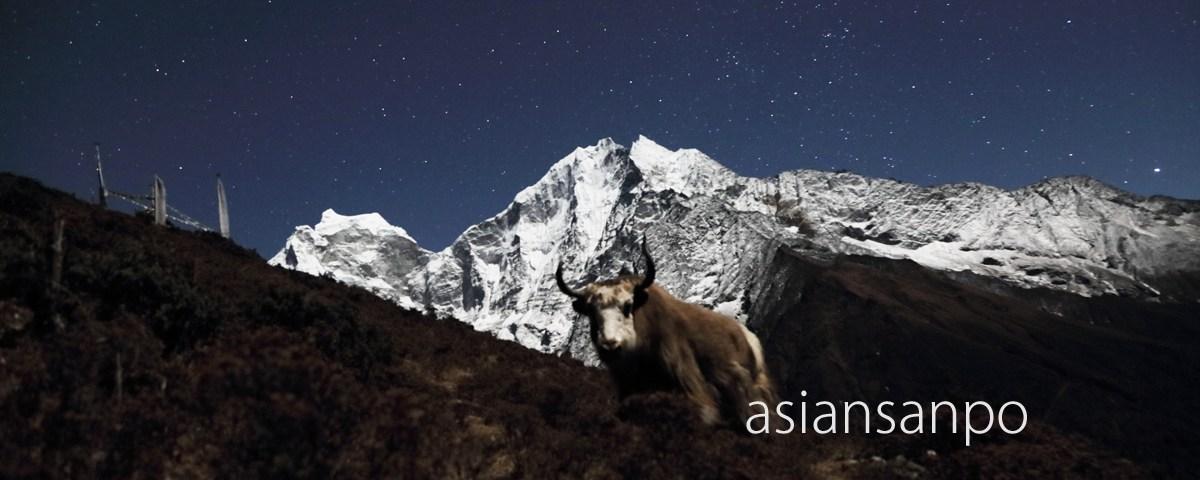 ネパール エベレスト街道 ポルチェ ヤク
