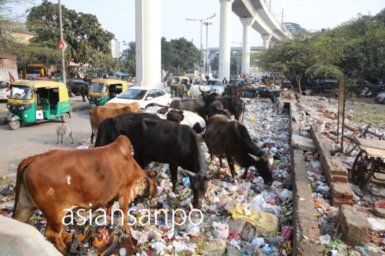 インド ニューデリー 牛