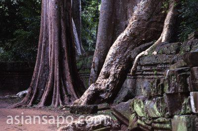 カンボジア タ・プロム