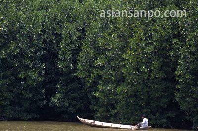 ベトナム ベンチェのマングローブ
