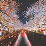 Sakura Japan Guide To Enjoy The Cherry Blossom Festival Spring 2020