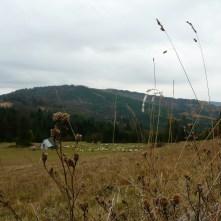 hala boracza, późna jesień