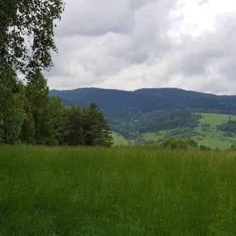 łąki, góry, Beskid Sądecki
