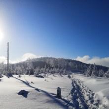 zima, las, Klimczok