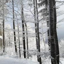 las, zima, śnieg, Błatnia