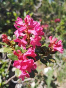 Kwiaty, Monte Stivo