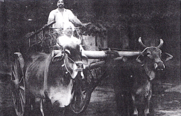 Sikh bullock cart driver transporting goods in Serdang, Selangor, in 1944