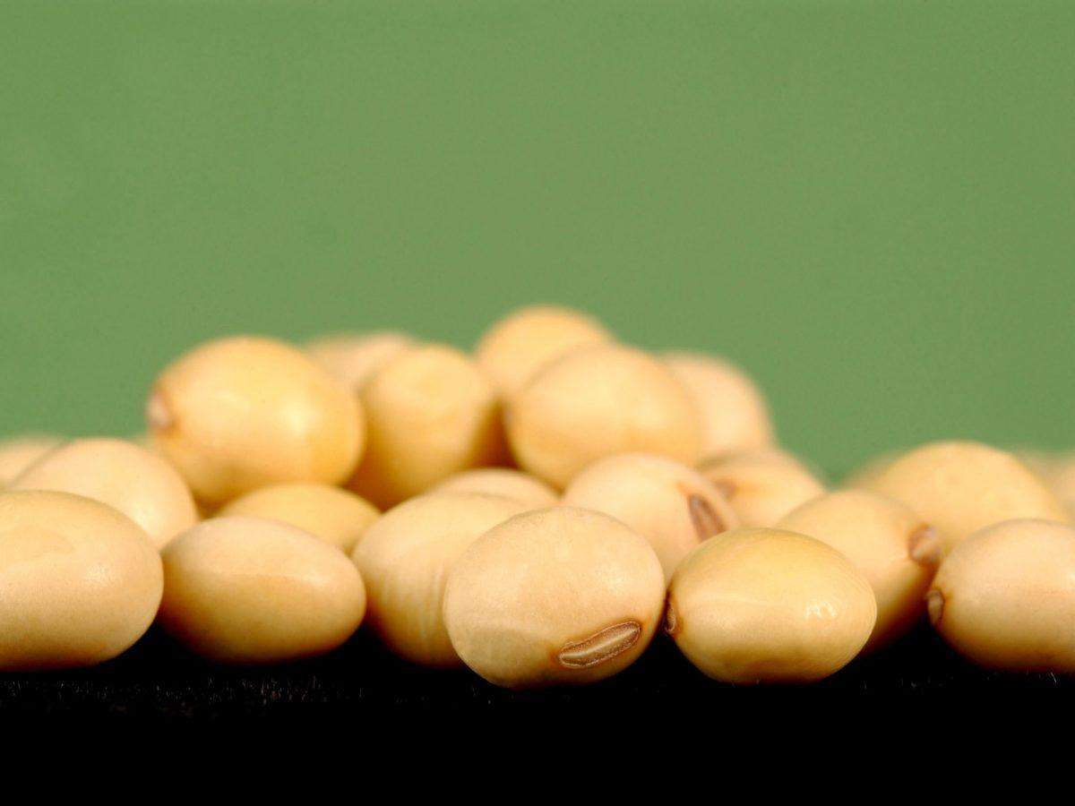 Close up of Soybeans. Photo: CSIRO