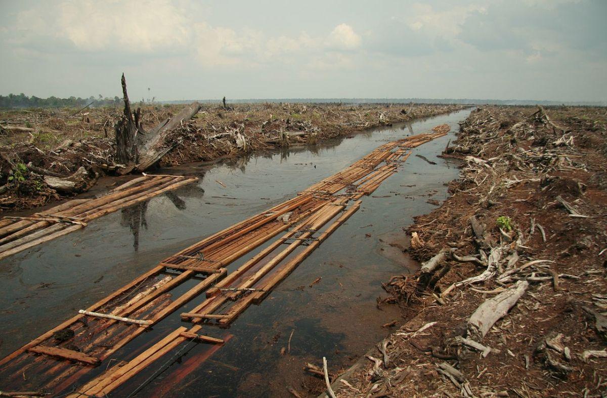 Riau Deforestation. Photo: Wikimedia Commons