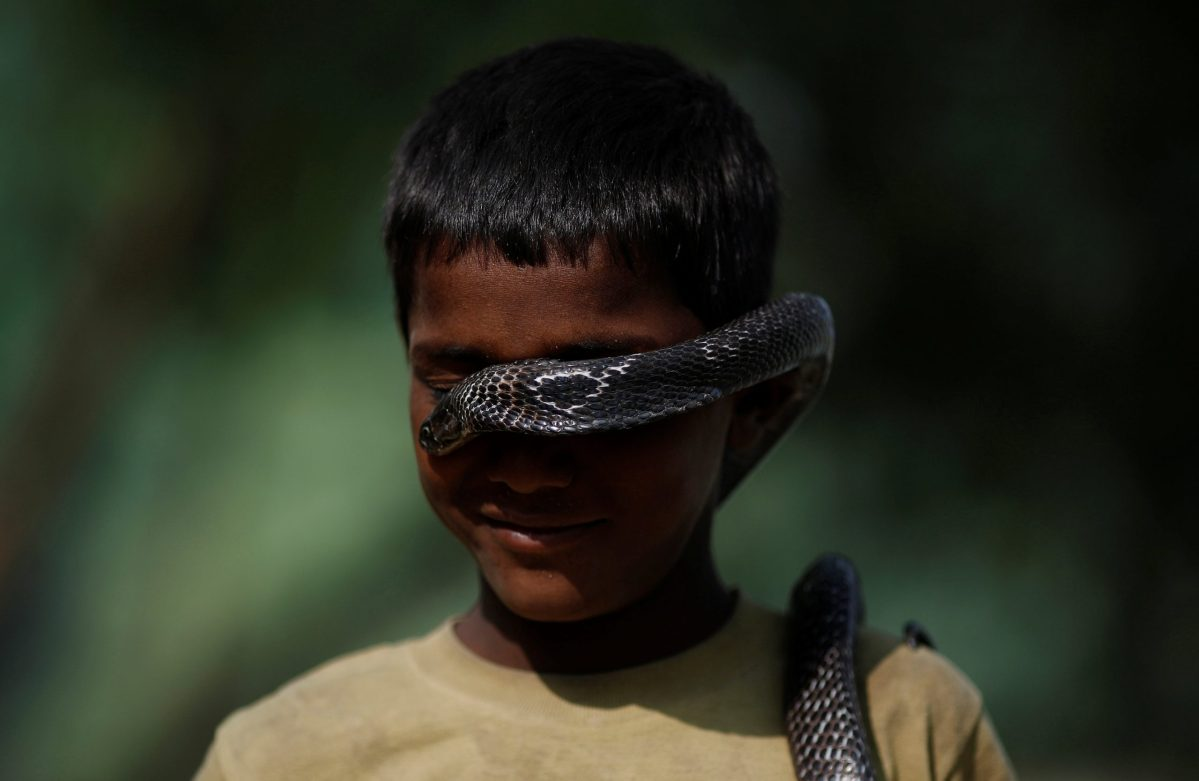 Love is blind. Ashiq Nath poses with a cobra in Jogi Dera, the snake charmers' settlement. Photo: Reuters/Adnan Abidi
