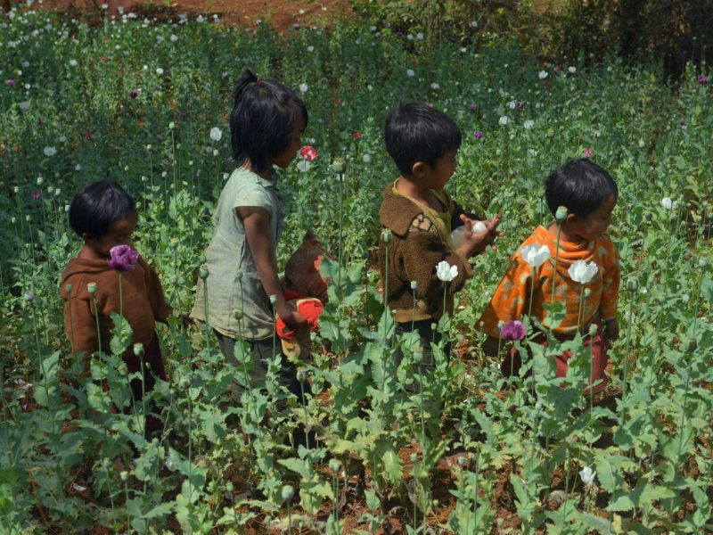Children walking through an opium plantation in Pekon in southern Shan state.Photo: Hyo Hein Hein Kyaw/ AFP