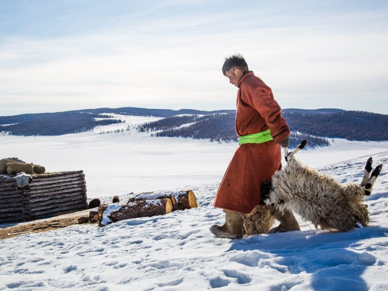 Mongolian herder Munkhbat Bazarragchaa adds two sheep to the pile of dead animals behind his ger in Khuvsgul province, northern Mongolia. Photo: IFRC via AFP