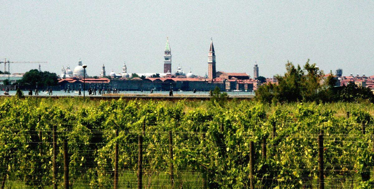 Vineyards at the Orto di Venezia on San Erasmo island. Photo: Courtesy of Orto di Venezia