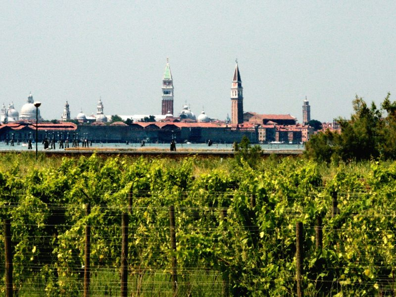 Vineyards at the Orto di Venezia on San Erasmo island. Photo: Courtesy of Orto di Venezia