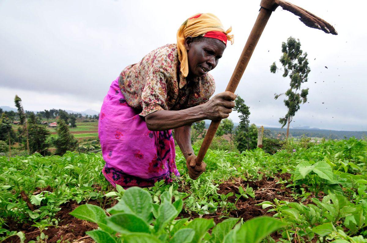 A farmer at work in Kenya's Mount Kenya region. Photo: Neil Palmer/CIAT via Wikipedia Commons