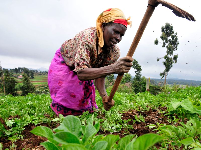 A farmer at work in Kenya's Mount Kenya region. Photo: Neil Palmer/CIAT via Wikipedia Commons