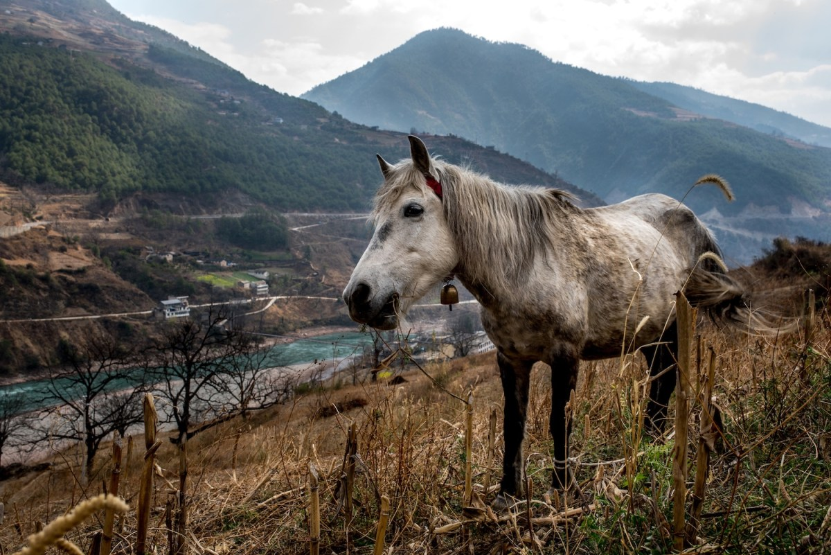 A horse grazes on the mountain sides overlooking the village of Xialuoga, Yunnan, China. Photo by Luc Forsyth/Mongabay