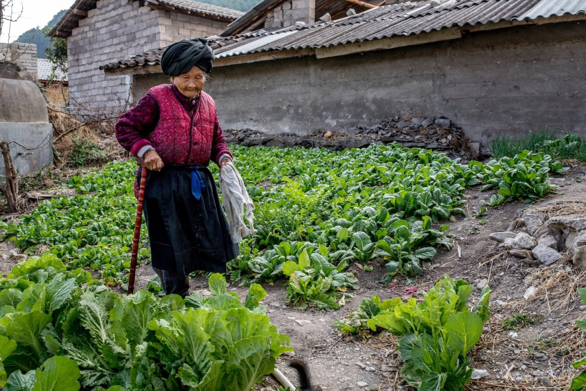 An elderly woman tends to her vegetable plot in the village of Xialuoga, Yunnan, China. Photo by Luc Forsyth/Mongabay