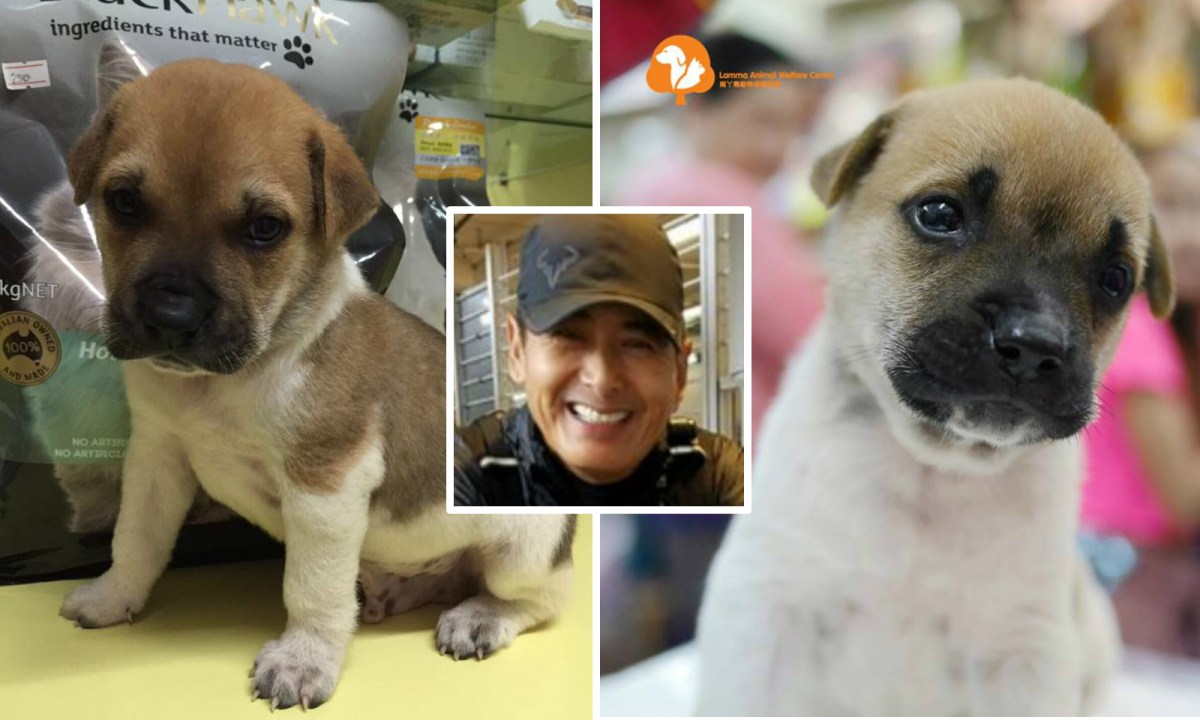 Hong Kong movie star Chow Yun-fat (inset) is appealing for new homes for puppies. Photos: Facebook / Lamma Animal Welfare Centre