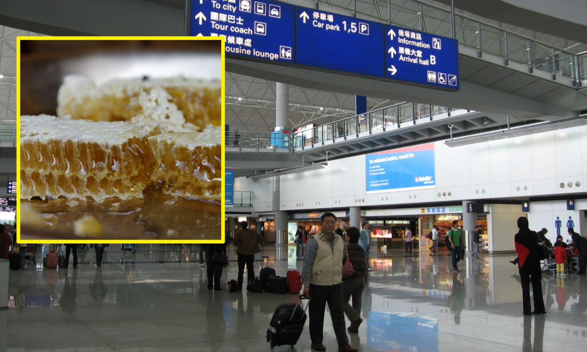 """A Hong Kong man is recovering from so-called """"mad honey"""" poisoning after eating Nepali honey bought from friends. Photo: Wiki Commons"""