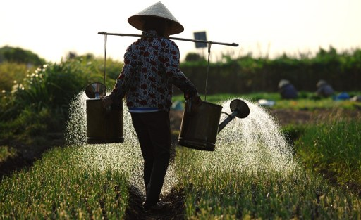 Vietnamese agricultural output per worker is less than one-third of Indonesia's and less than half that of the Philippines and Thailand. Photo: AFP, Hoang Dinh Nam.