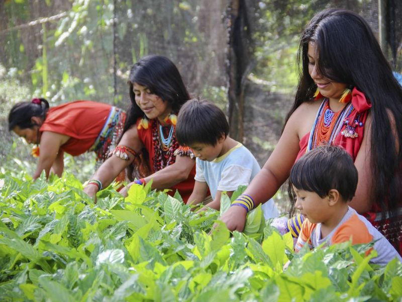 Indigenous Awajún women in Shampuyacu, Peru. Conservation International has worked with these women to designate a forest of their own where they can cultivate traditional plants. Photo: Freddy Guillen