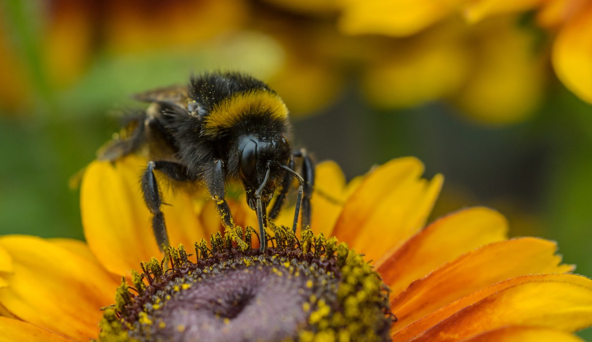 Pollinators. Photo: CC/Unsplash/Dominik Scythe