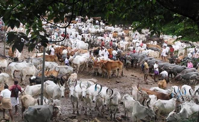 A monthly cattle market near Mundakayam in Kerala's Kottayam district.    Photo: The Hindu