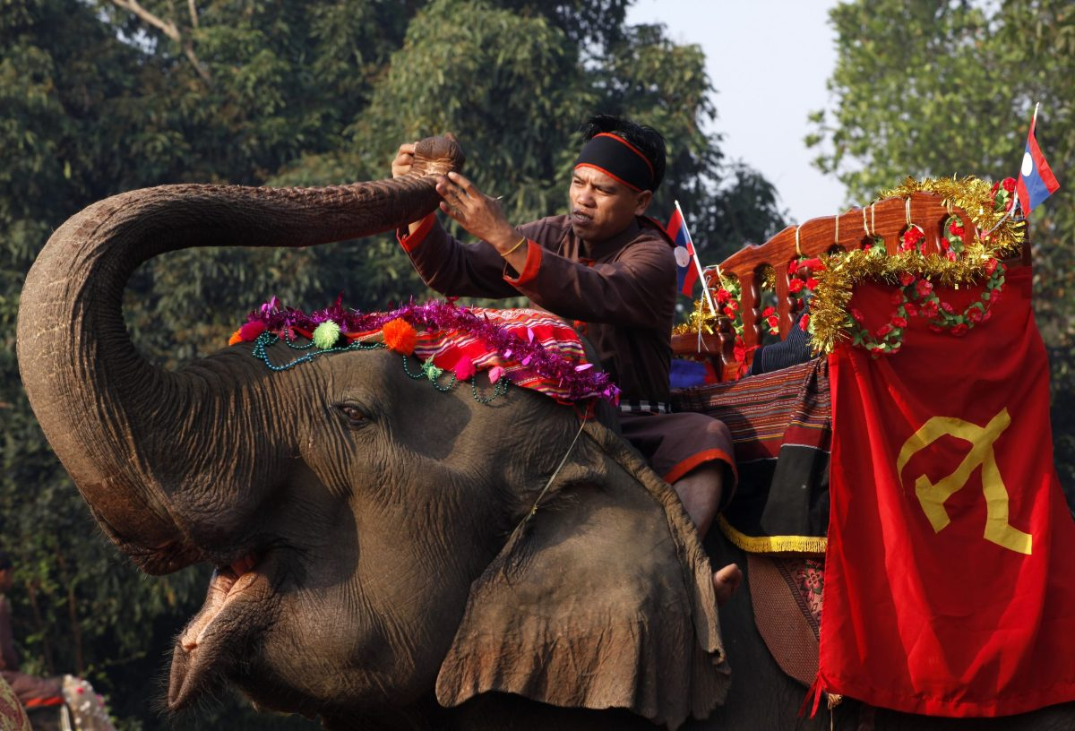 An elephant and mahout during a festival in Sayaboury Laos. Photo: AFP via Biosphoto/Jean-François Mutzig