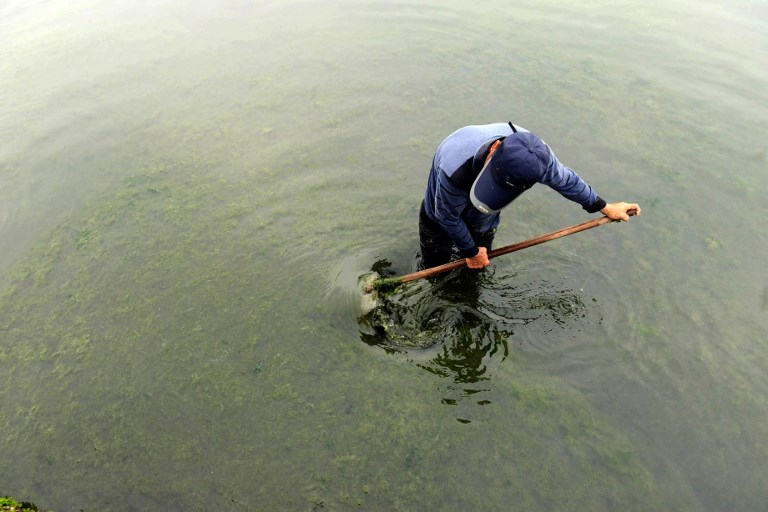 A worker cleaning out the algae in a culture pond in Qingdao, China. North Korea is reportedly ramping up its own efforts to produce algae to be used as an energy source. Photo: AFP