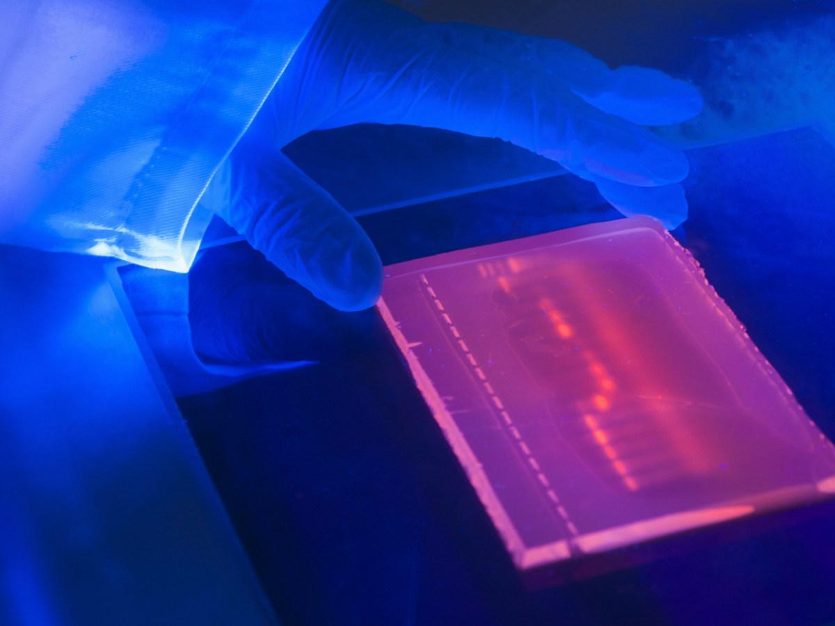 A laboratory ultraviolet light box seen during electrophoresis for detection of DNA. Photo: Getty images