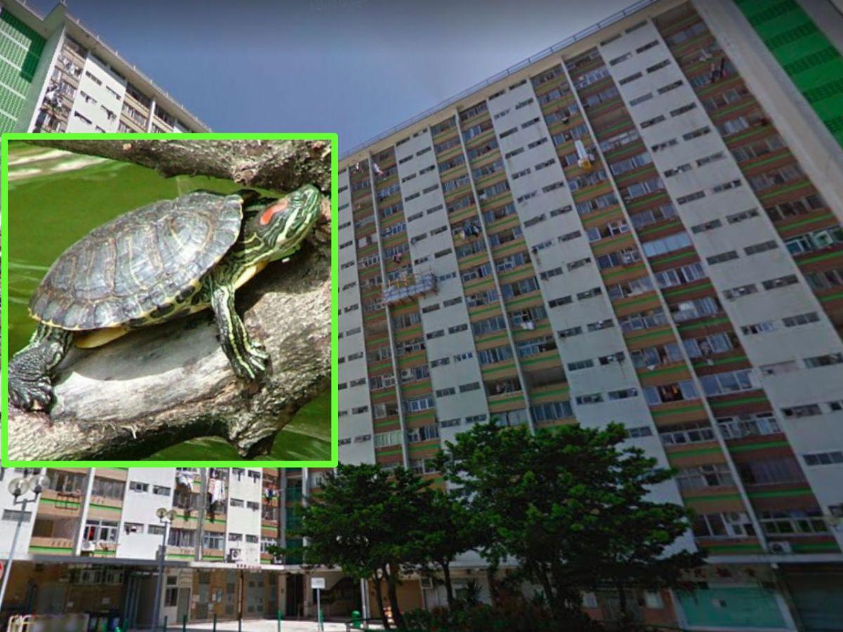 Chai Wan, Hong Kong Island. Photos: Google Maps, Wikimedia Commons