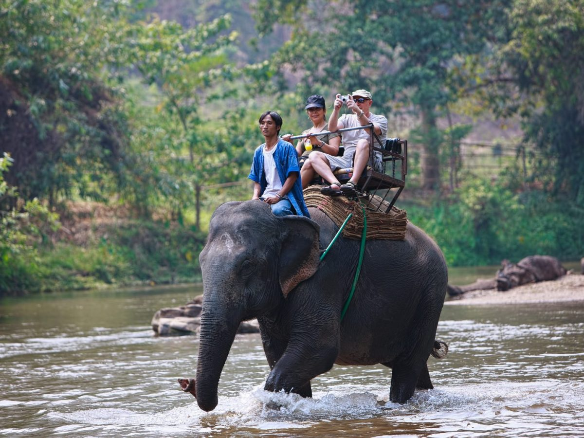Two tourists enjoy a ride on an elephant during a trek near Chiang Mai. They are generally peaceful animals but can be upset by overwork or harsh treatment by a mahout. Photo: iStock