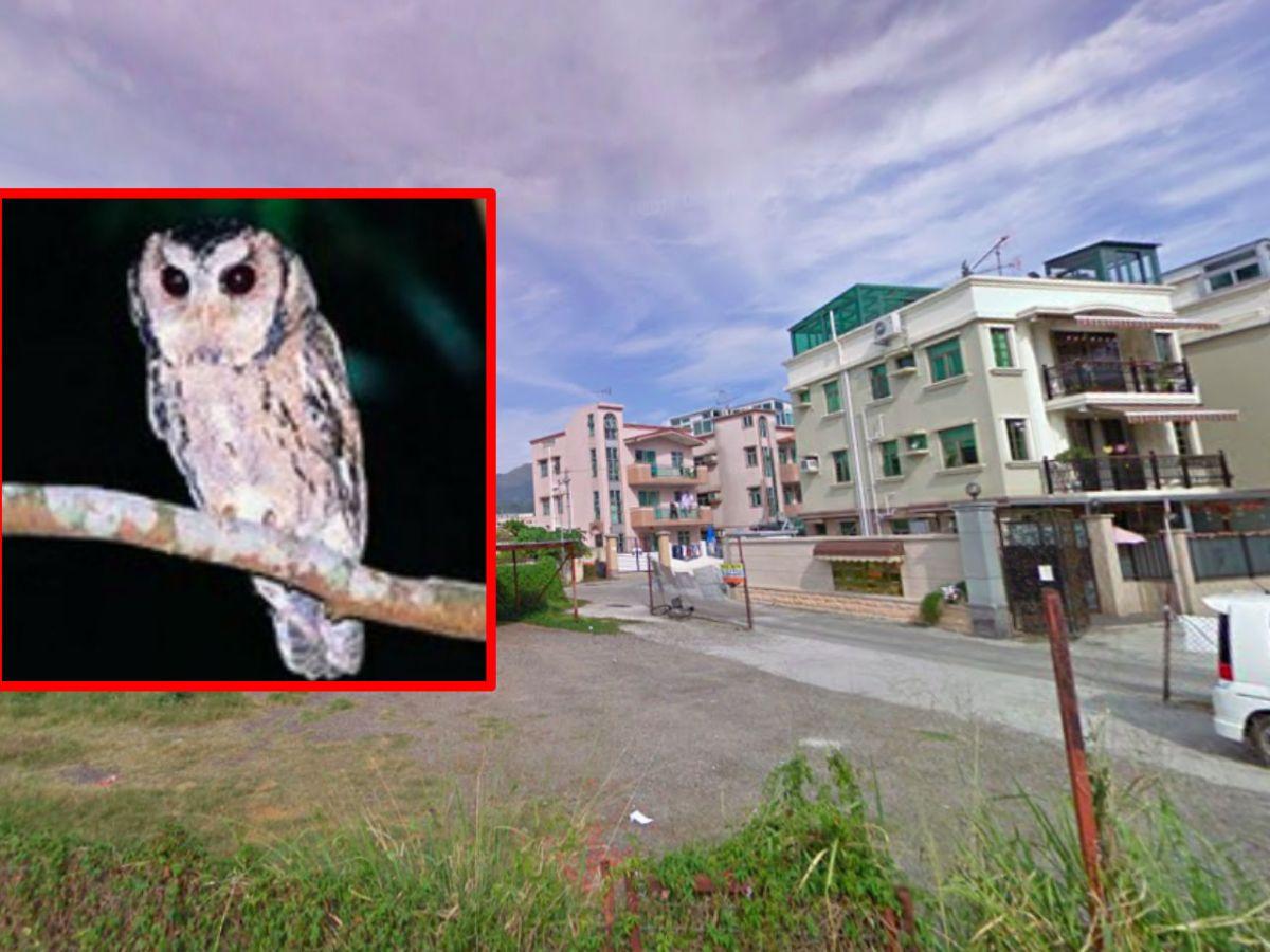 Yuen Long, New Territories. Inset: an endangered species of owl. Photos: Google Maps, AFCD