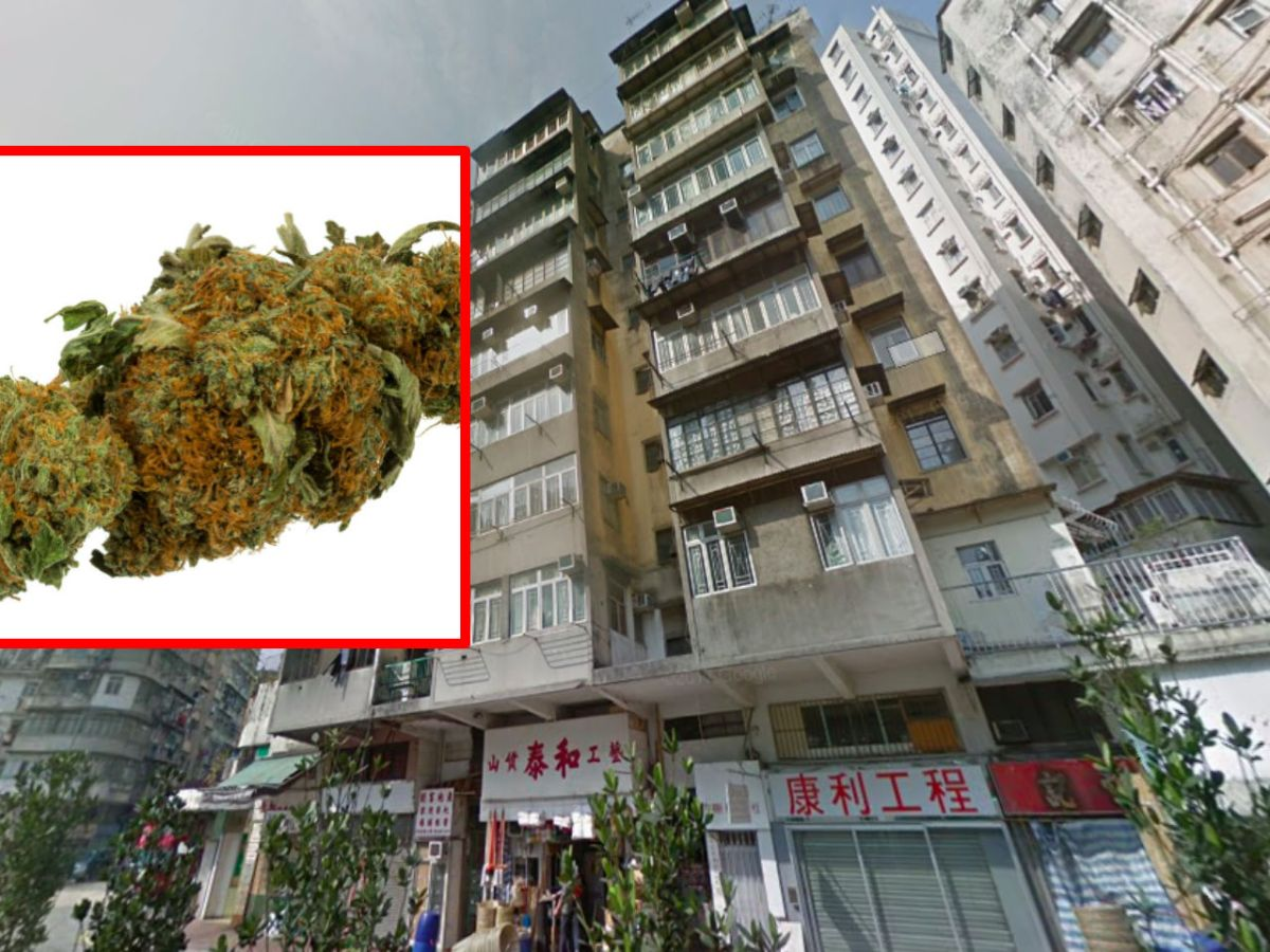 Cannabis buds, inset, at Sham Shui Po in Kowloon. Photo: Google Maps, Wikimedia commons
