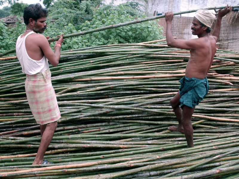 Men from India's Erikala tribe unload bamboo from the Nalamalla forest, at their hamlet at Lingala Mandal in Mahbubnagar district in Andhra Pradesh. The Erikala tribals earn their livelihood mainly by making bamboo products. Photo: AFP