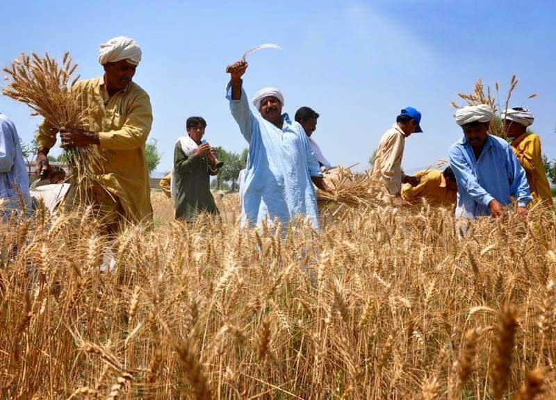 A debt crisis in Punjab  has trapped thousands of  farming families for generations. Photo: Wikimedia Commons