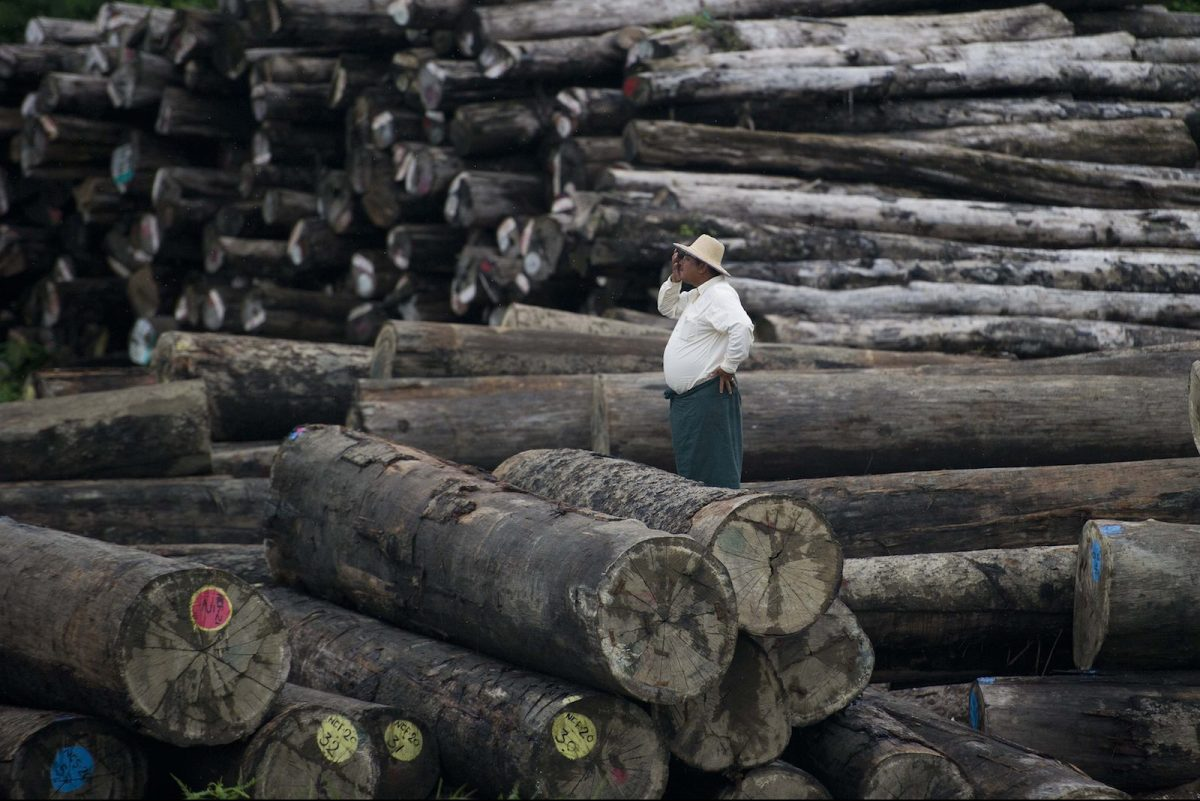A worker amid a pile of logs at a holding area along the Yangon river in Yangon on July 23, 2015. Photo:  AFP PHOTO /  Ye Aung THU