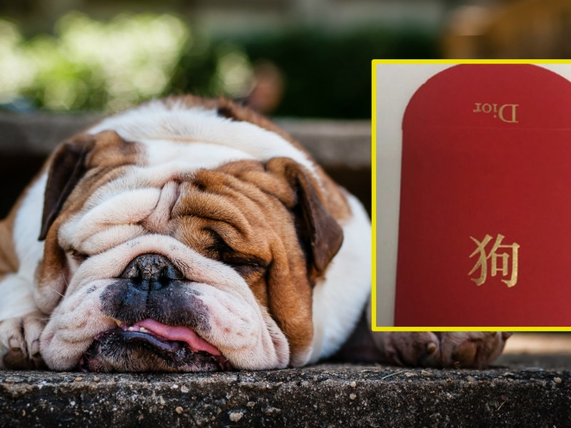 "Christian Dior's red packet with a single word ""dog"" on it has faced serious. Photo: iStock"