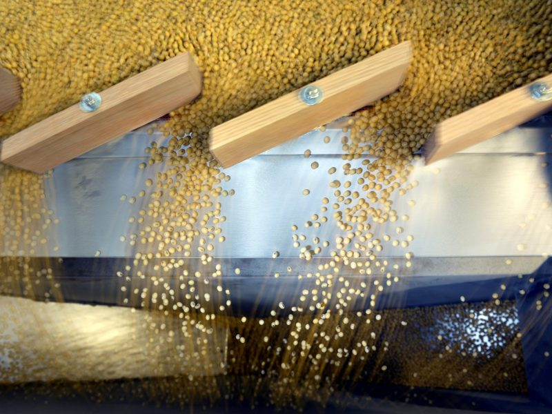 Soybeans. Photo: Reuters/Dan Koeck