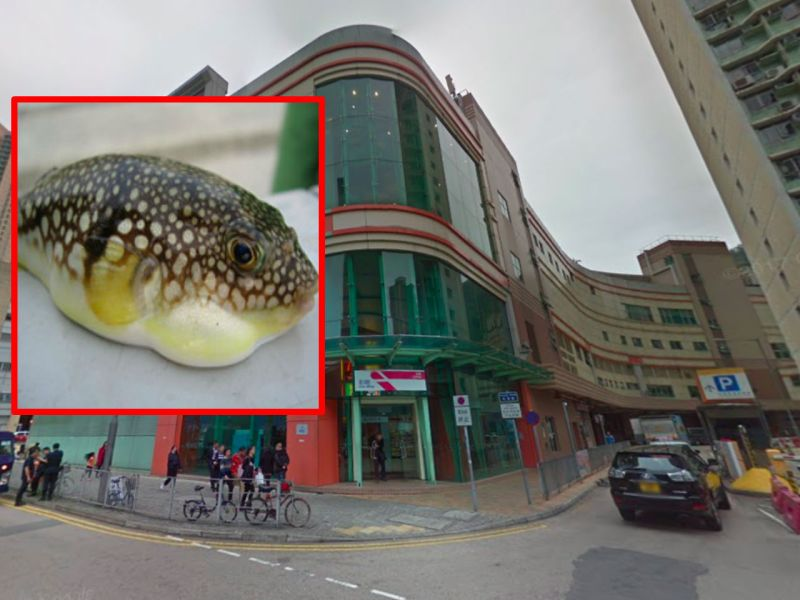 Tseung Kwan O in the New Territories and (inset) a puffer fish. Photo: Google Maps, Wikimedia Commons,