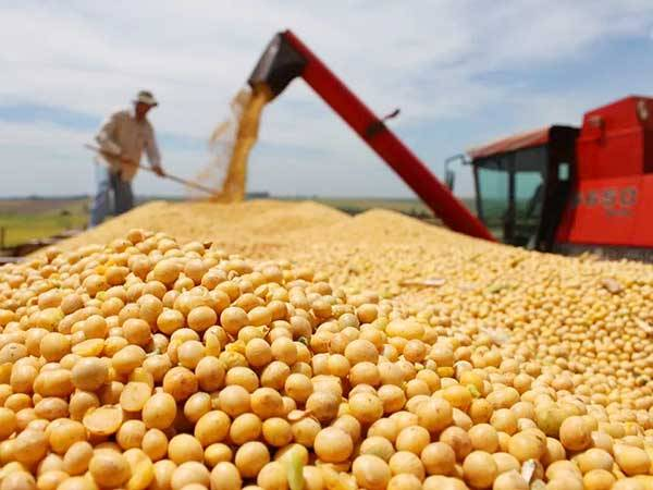 A farmer harvests soybeans in China's Jilin province. Photo: Xinhua